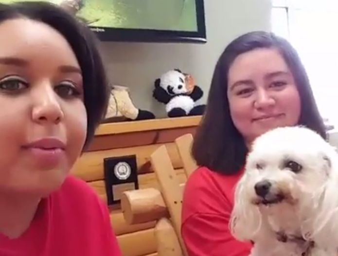 Live Q&A: Home Buddies by Camp Bow Wow