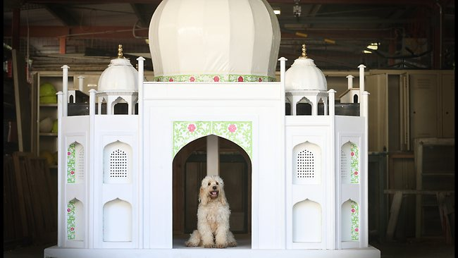 588667-taj-mahal-dog-house