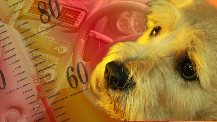 Saving trapped pets from hot cars — the legalway!