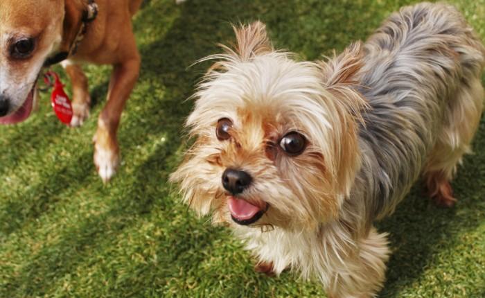 Pet Parenting 101: Keeping your dog groomed betweengroomings