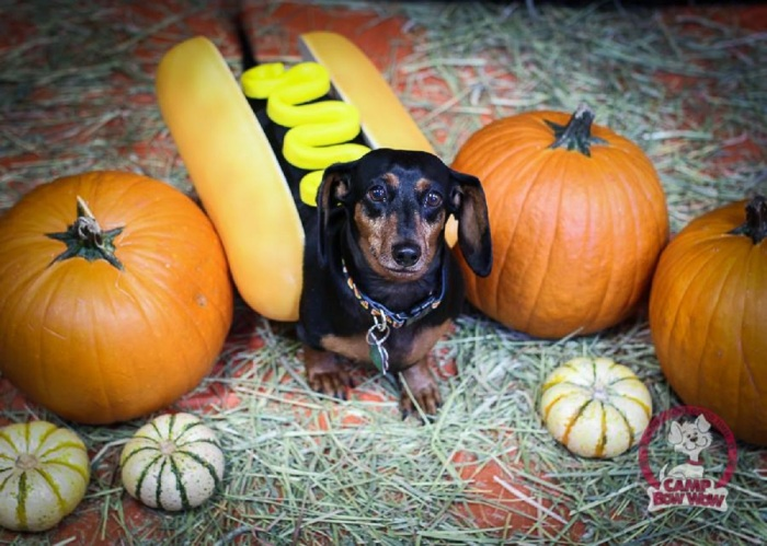 Enter Camp Bow Wow Halloween Costume Contest— WIN FREEDAYCARE!